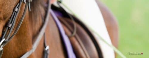Pferdeausrüstung Pferd Nogo Slider