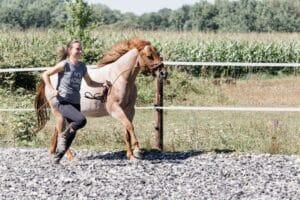 Mindset-Switch: Wie du dein Pferdetraining im Alltag optimieren kannst 1