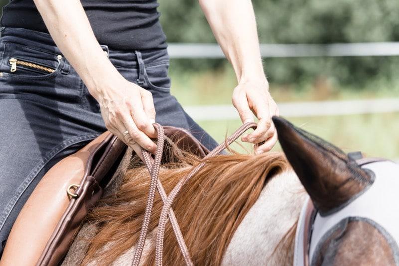 Mindset-Switch: Wie du dein Pferdetraining im Alltag optimieren kannst 2