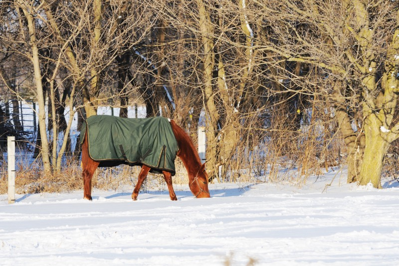 Pferd mit Decke im Schnee
