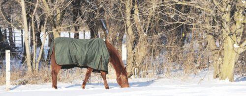 Pferd eingedeckt im Winter