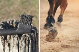 Der ultimative Guide über Pferde Hufe! Damit du sofort erkennst, ob bei der Hufpflege alles rund läuft 1