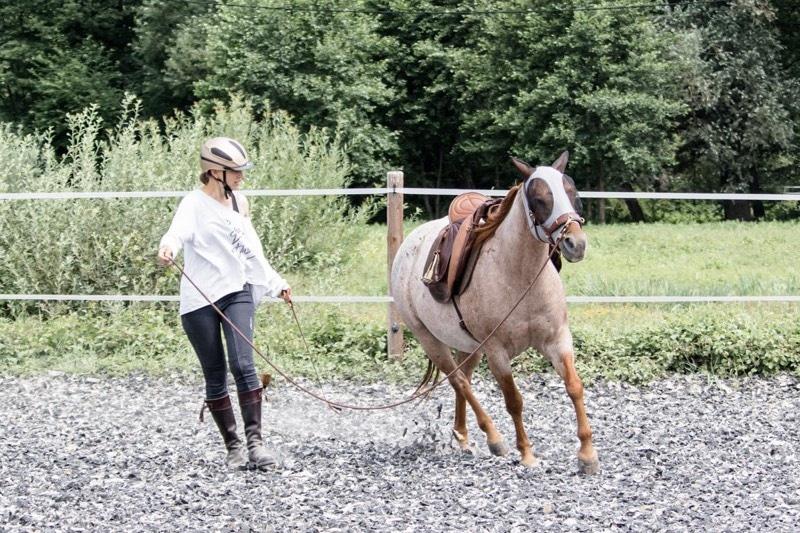 Gefühle bei Pferden: 3 überraschende Ergebnisse aus der Forschung 6