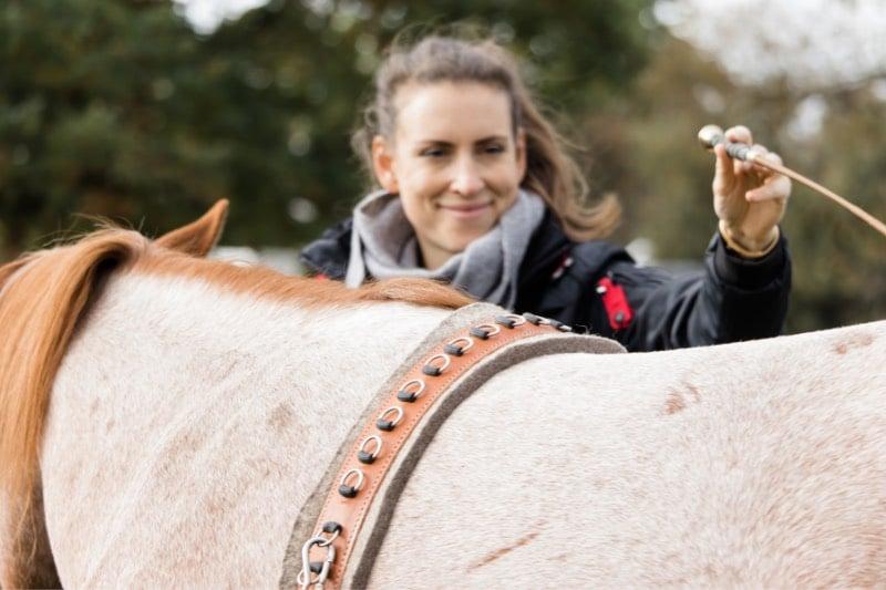 Pferdeflüstern lernen: Wie du dein Pferd besser verstehen kannst 2