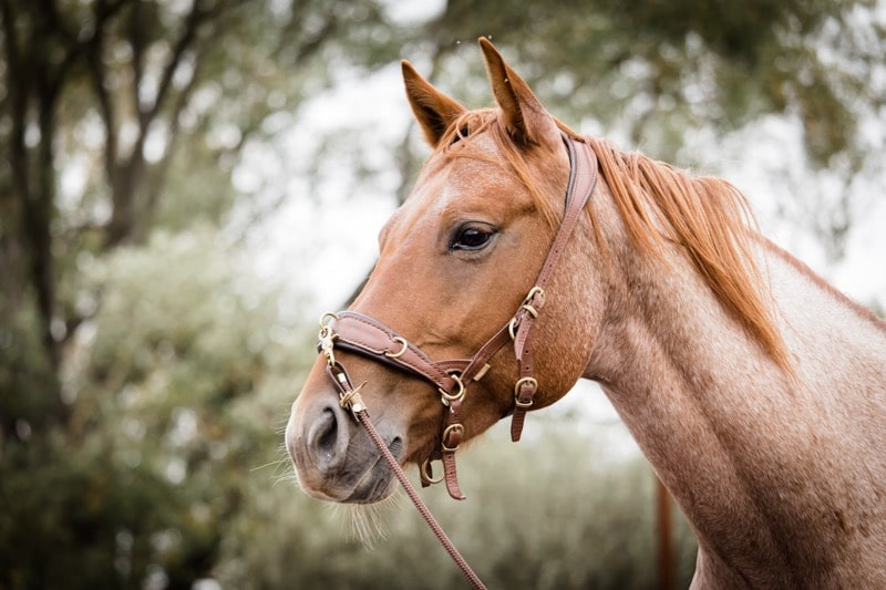 Pferdeflüsterei.de - Weil dein Pferd dich dafür lieben wird. 4