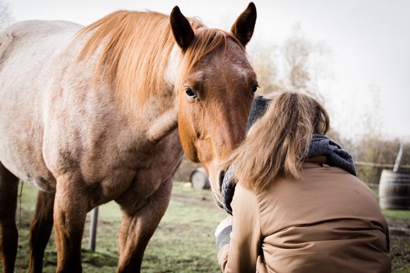 Gefühle bei Pferden: 3 überraschende Ergebnisse aus der Forschung 4