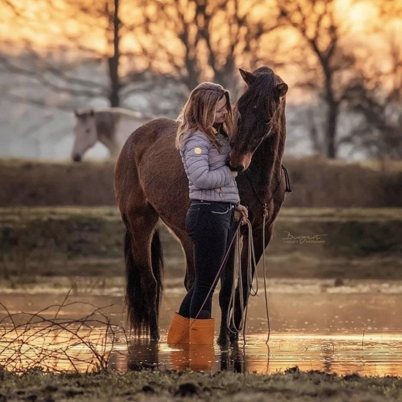 """Schnapp dir den Pferde Onlinekurs """"Embodiment for Horses"""" 2"""