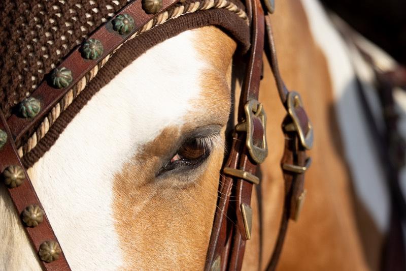 Working Equitation! Für mehr Bindung und Vertrauen 4