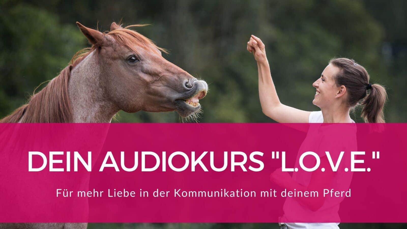 """Schnapp dir den Pferde Onlinekurs """"L.O.V.E."""" für eine bessere Beziehung 2"""