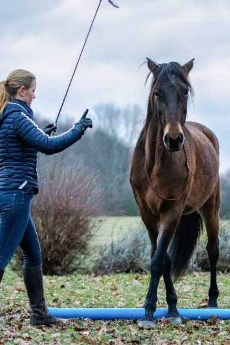"Schnapp dir den Pferde Onlinekurs ""Basics der Bodenarbeit"" 3"