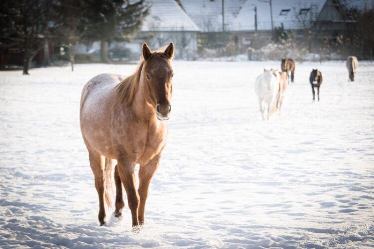 Gelassenheit-mit-pferd6