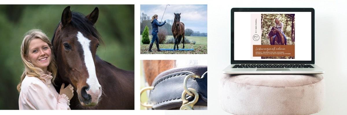 Pferdeanatomie erklärt! Der Rücken und seine Stellschrauben 1