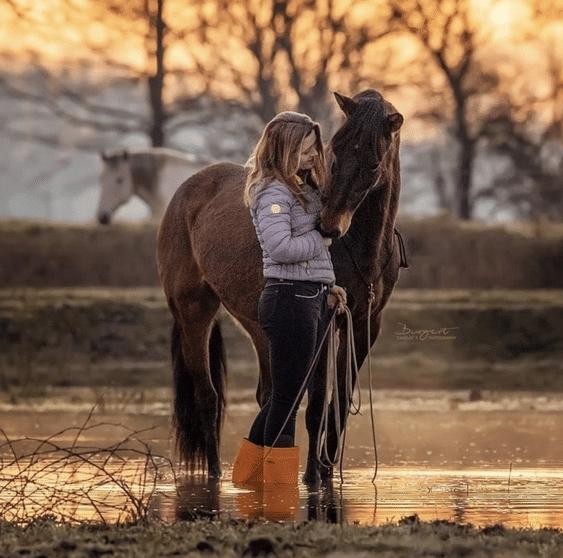 Embodiment für Pferde! Wie du das Gefühl deines Pferdes im Training beeinflusst 4