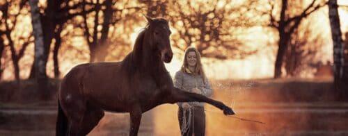 Hero mit Pferd das spanischen Schritt macht