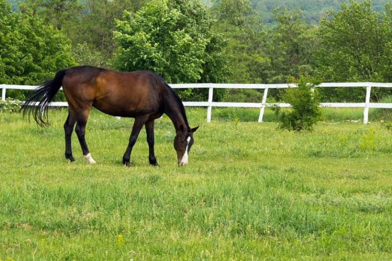 Pferd grast auf Weide