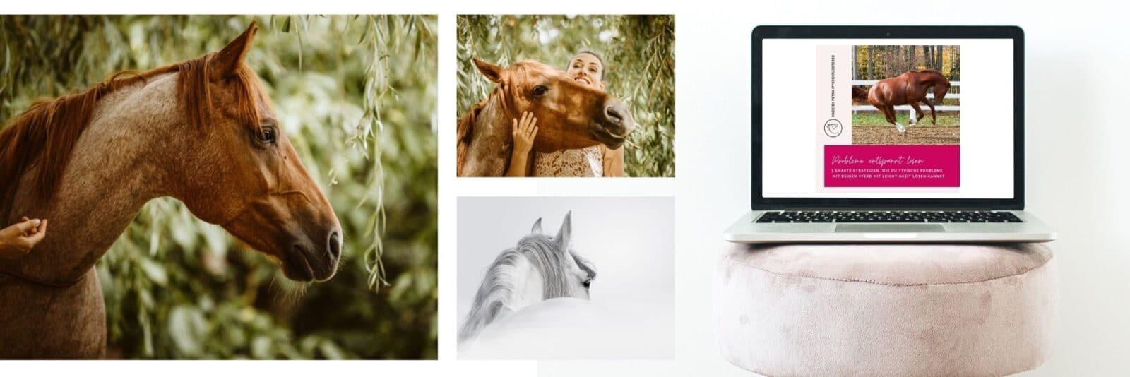 """Schnapp dir den Pferde Onlinekurs """"Probleme sanft lösen"""" 2"""