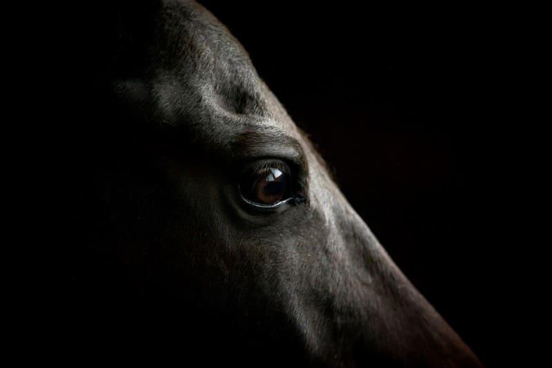 """Trauriges Thema """"Pferdetod"""" - Was tun wenn das Pferd gestorben ist 1"""