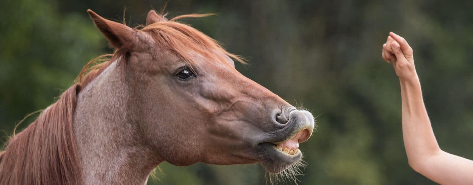 Pferdeflüsterei.de - Weil dein Pferd dich dafür lieben wird. 3