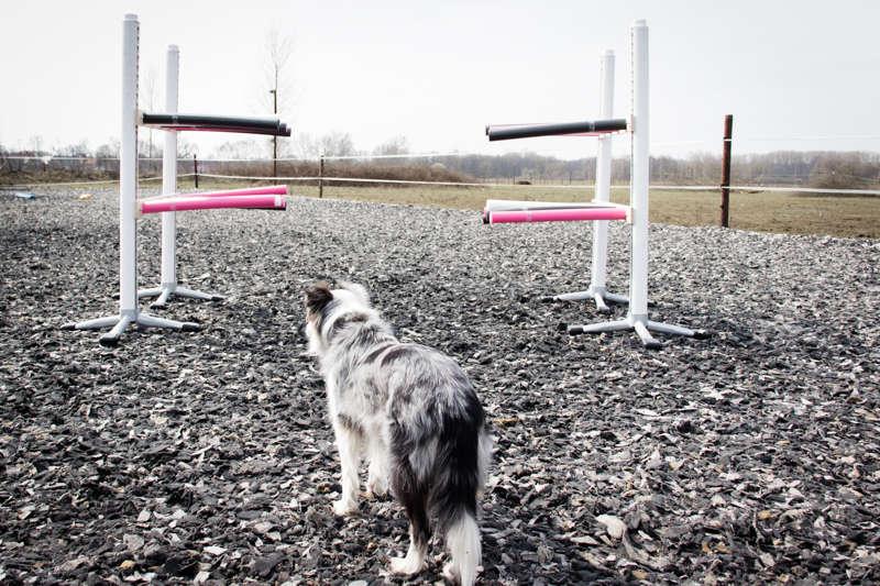 Vertrauensgasse mit Hund