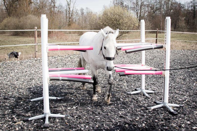 Pferd läuft durch die Vertrauensgasse