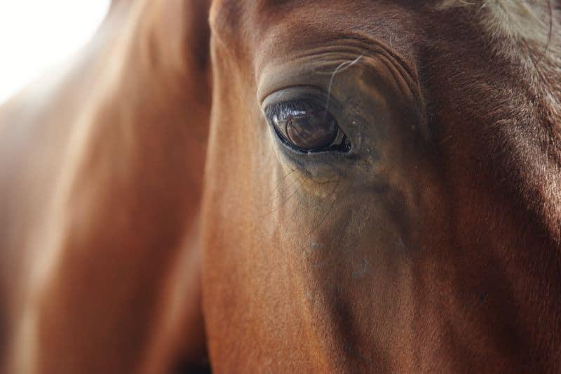 Nervöses Pferd - Verblüffende Tipps für mehr Gelassenheit 1