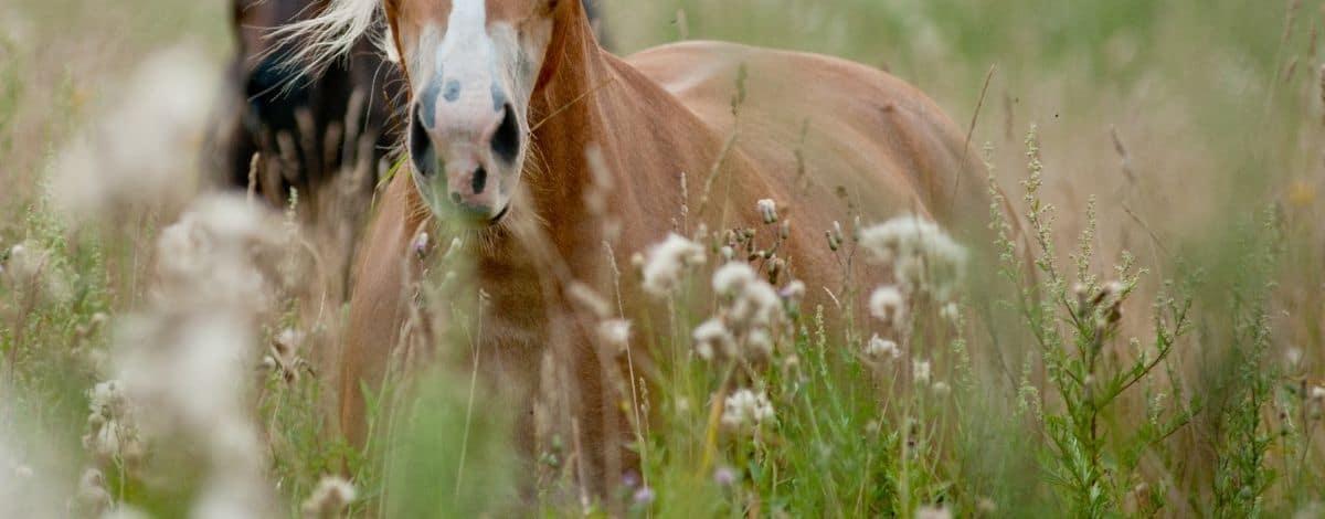 Header Pferde in hohem Gras