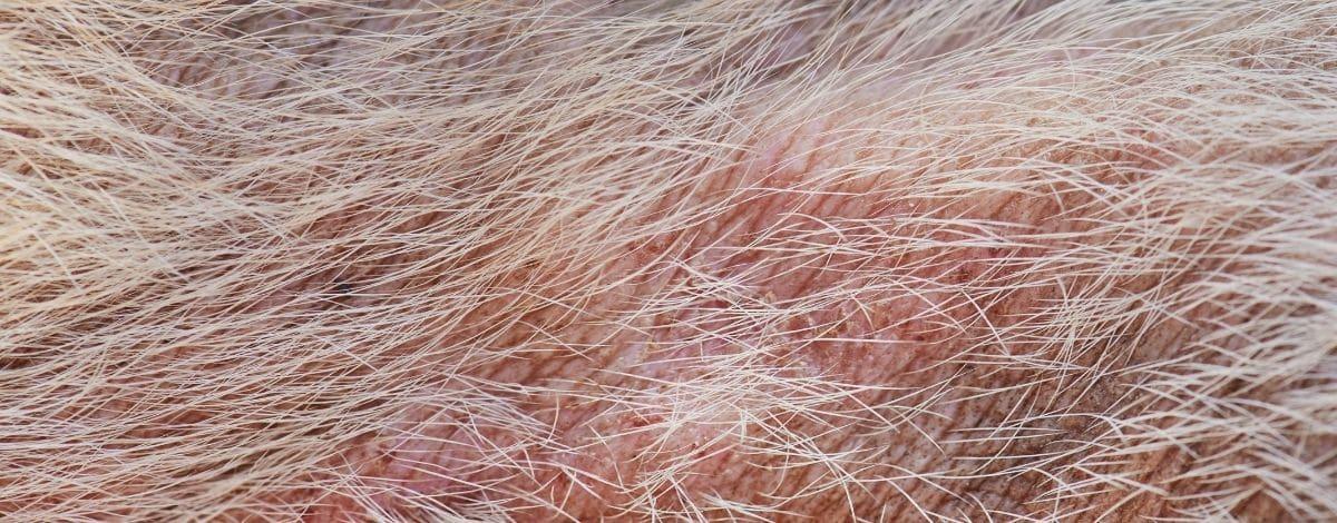 Hautpilz beim Pferd