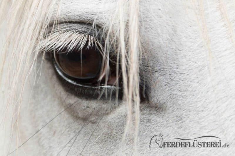 Pferdeanatomie erklärt! Wie Pferde die Welt sehen 1