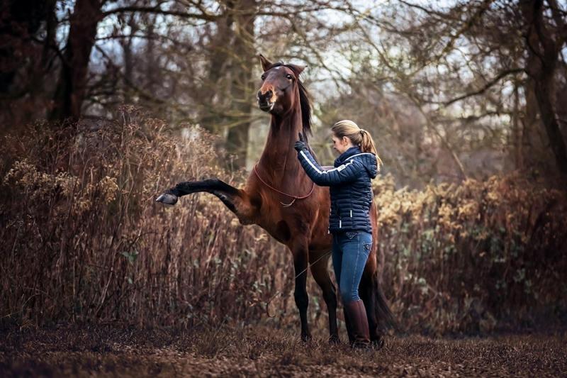Heor macht Freiheitsdressur mit Pferd