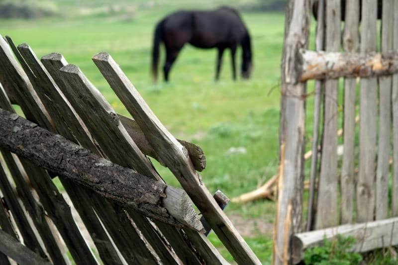 OP Versicherung - Zerbochener Zaun mit Pferd im Hintergrund